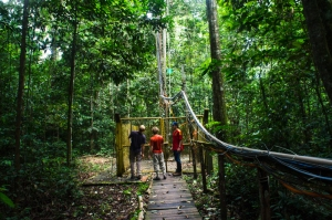The other tower, which measures the carbon flux of the forest, must be climbed like a ladder, wearing a harness.