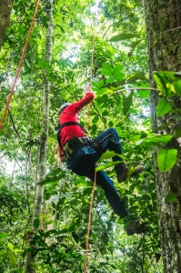 Alejandro learning to climb an access line into a 40m high canopy.