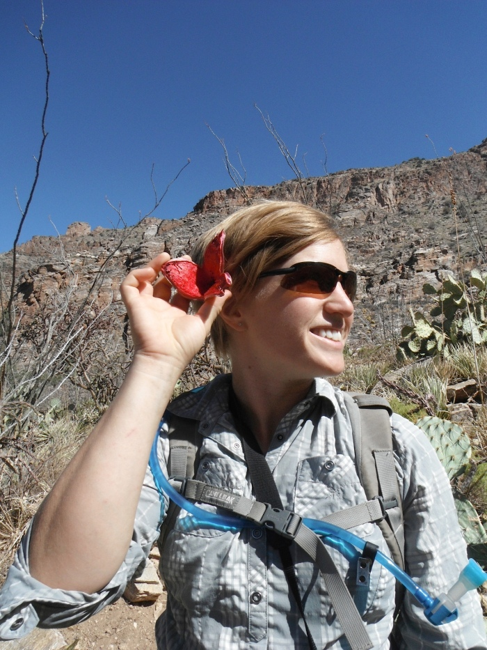 What I'm placing behind my ear is no tropical flower: that is the rind of a saguaro fruit, burst open to reveal the deliciousness inside! Behind me, most shrubs like the ocotillo are leafless. Thanks to Elena Martin for the photo.