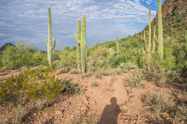 Two roads diverged in a saguaro wood and I... I took the one less survived by. I'm glad it made no difference.