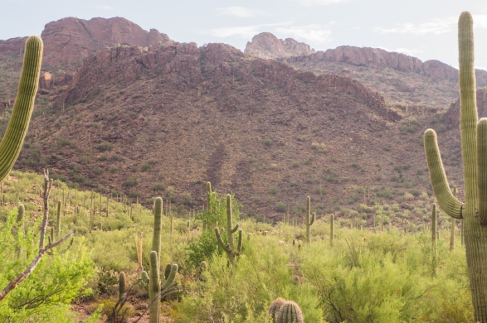 This is the kind of terrain I was in. Even though those hills look like they should draw lightning, the saguaros on the flat ground also do, it turns out.